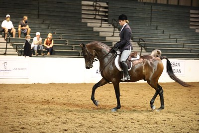 102A.Arabian Hunter Pls Jr. Horse Ladies & Gentlemen