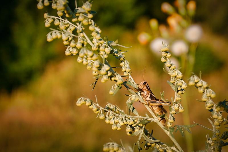 grashopper.jpg