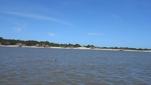 Jekyll Island Boat Tours Dolphin Daze Dolphin Videos 07-18-20