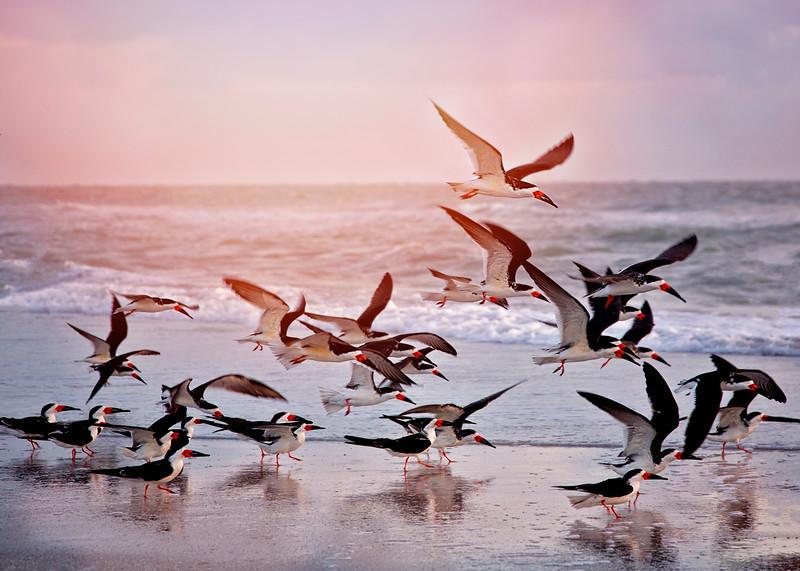 orange birds beach nature.jpg