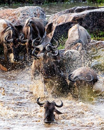 Serengeti North