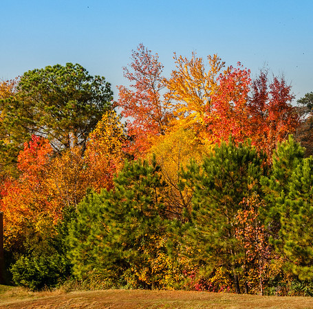 Fall Colors Around Richond, VA - November 2, 2013