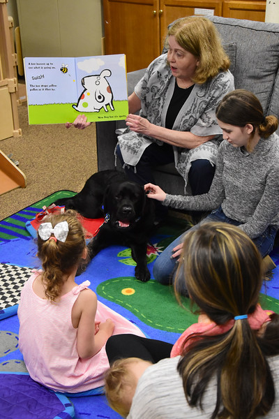 Lincoln- Therapy Dog - 051719