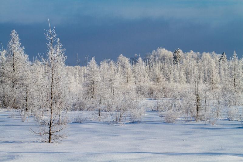 Hoar frost winter landscape CR133 Sax-Zim Bog MN  IMG_0032.jpg