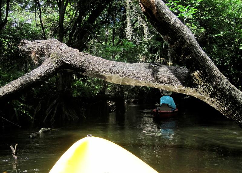 Loxahatchee River