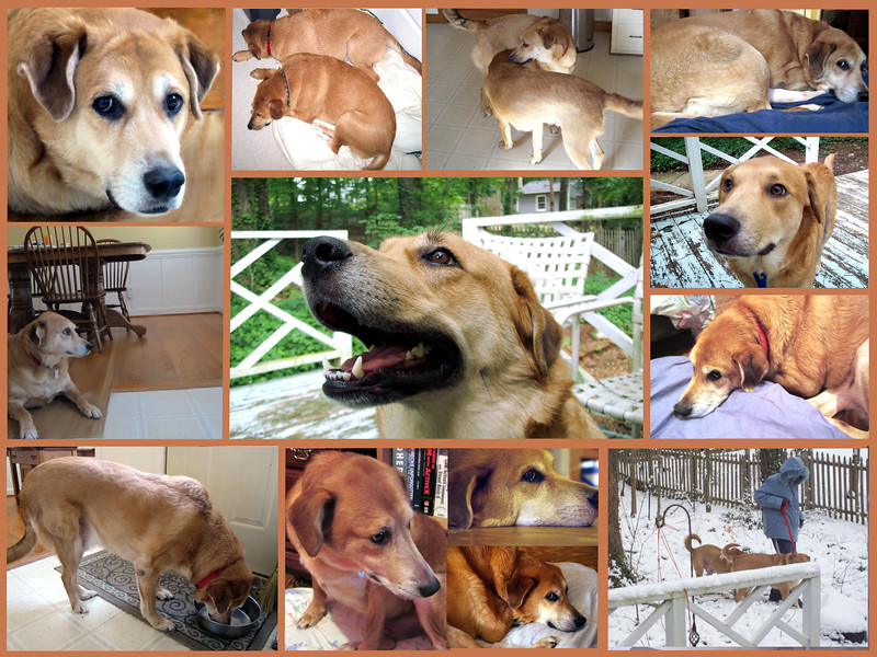 collage-older-dogs-brothers4.jpg