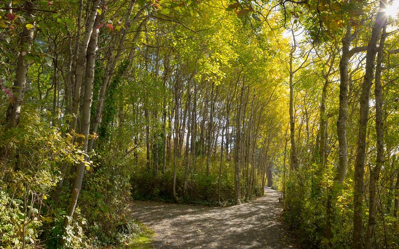 park trail.jpg