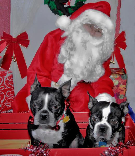 Toronto Meet Up Boston Terrier Xmas 08