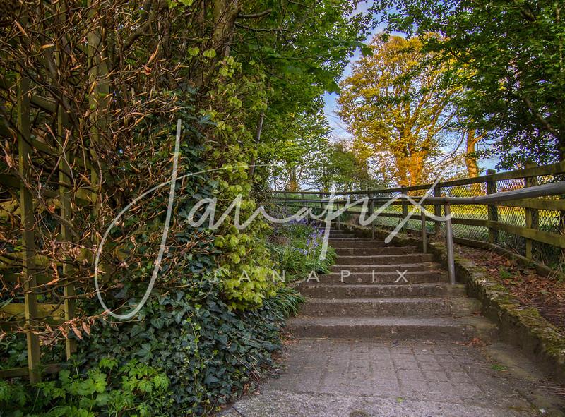 Friary Steps February.jpg