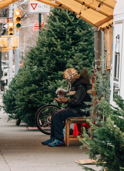 West village trees salesman 1.jpg