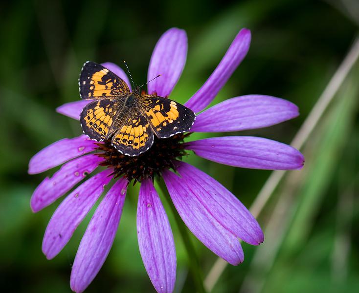 Butterfly 34.jpg