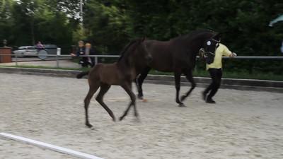 27.06.2012  - Stuten- und Fohlenschau - Video