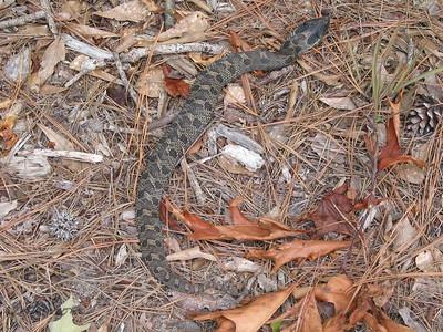 June 2002 Snake