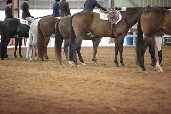 Hunt Seat Equitation - all Classes