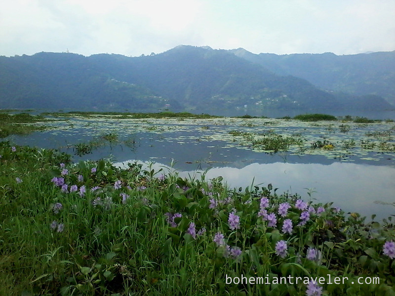Phewa Lake view with flowers.jpg