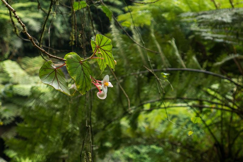 Nyugwe-Rwanda-29.jpg