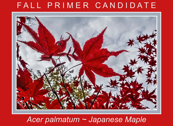 Fall primer candidates