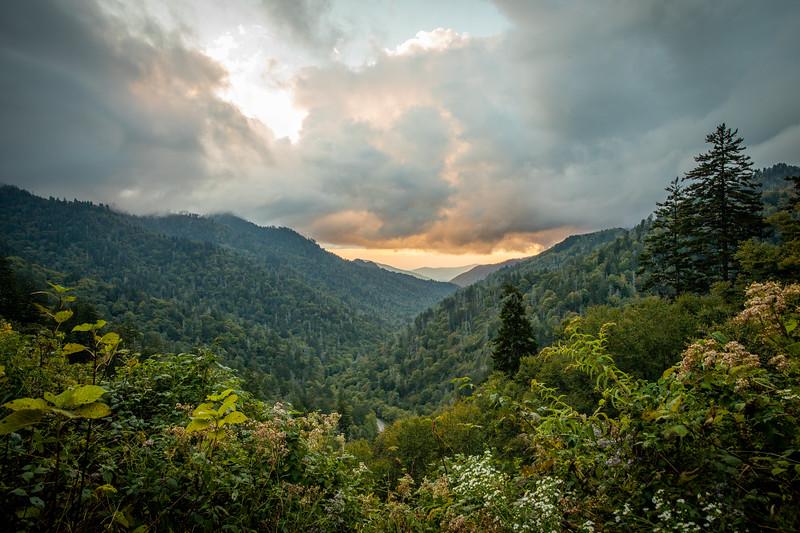 WVWS_Smoky Mountain National Park-7671.jpg