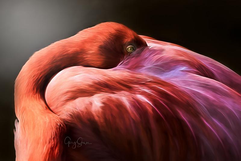 Pink Plumage WS.jpg