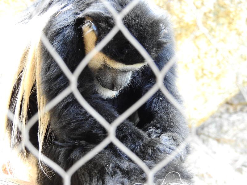 Cheyenne Mtn Zoo 2019 (1078).JPG