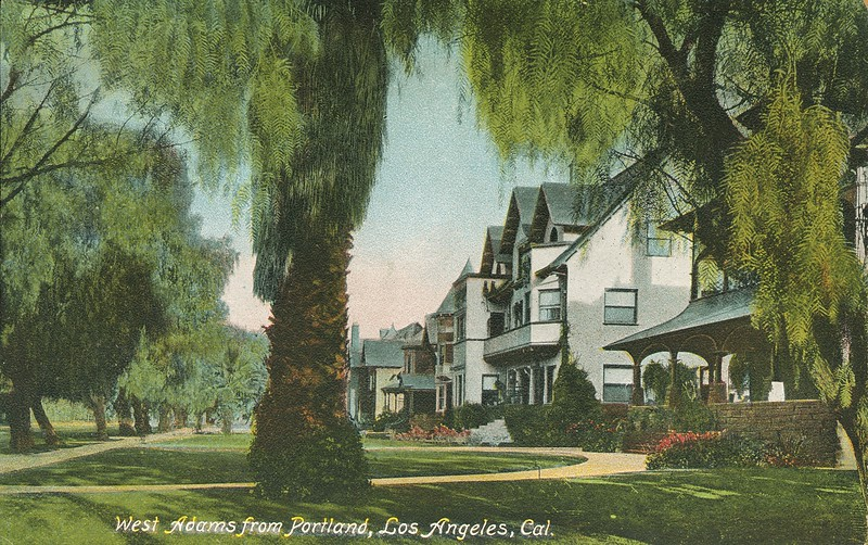View of trees and houses on West Adams Street, Los Angeles, California, ca. 1901-1907.