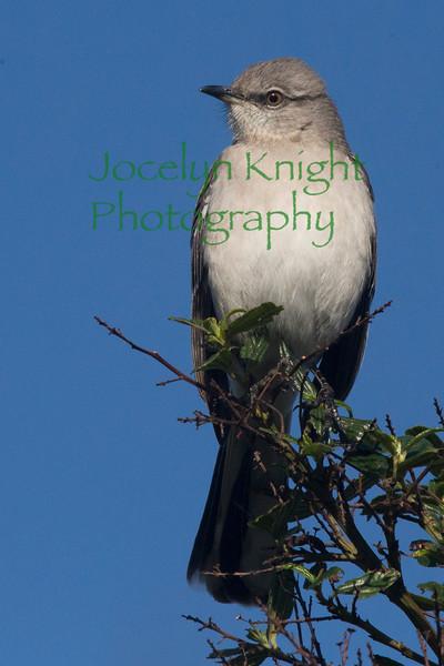 2014 Audubon Annual Birdcount 12/28