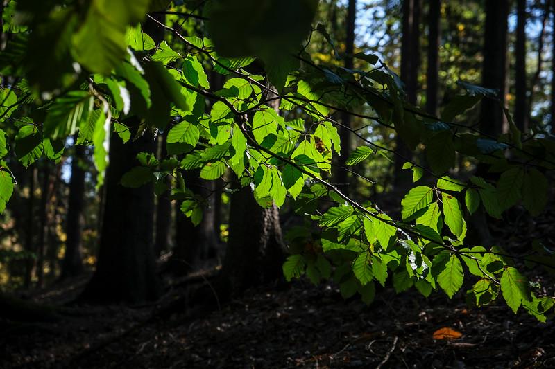 forest2018-012.jpg