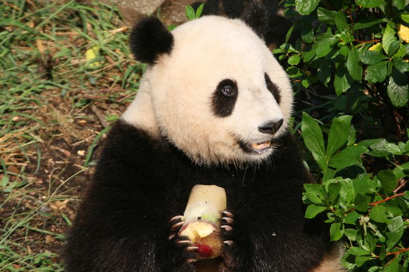 Panda072807_076.JPG