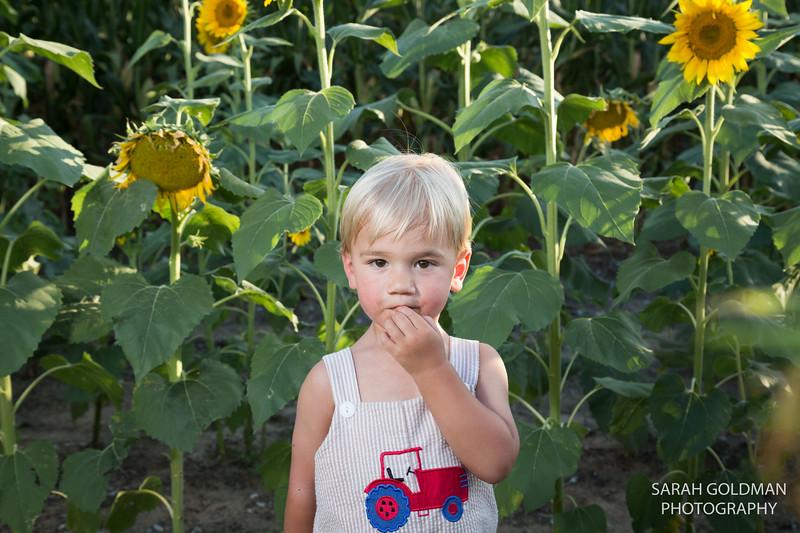 sunflower-session (8).jpg