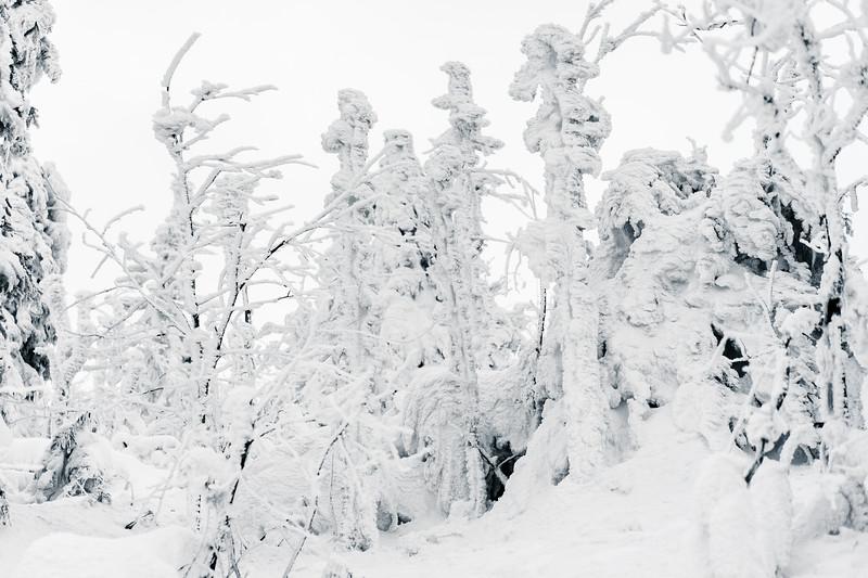 trees-under-heavy-snow-picjumbo-com.jpg