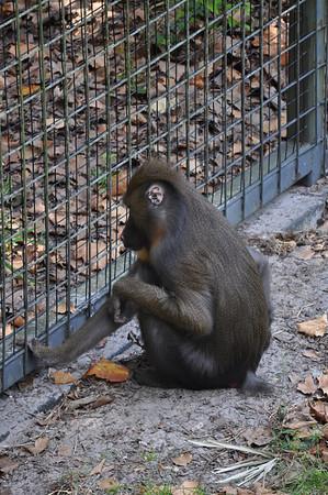 Rachel Halabi_Zoo