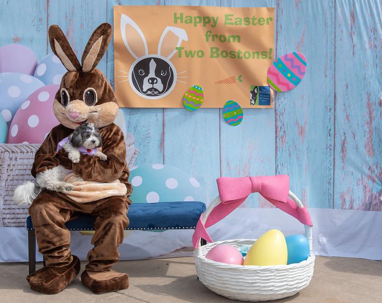 Easter2019TwoBostons-8247.jpg
