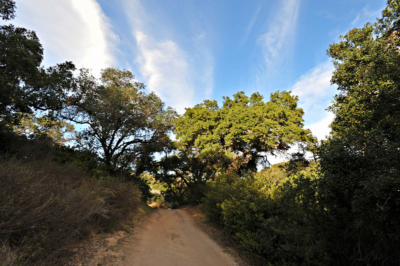 Aliso and Wood Canyons Wilderness Park