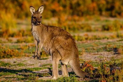 Eastern Australia - 2018