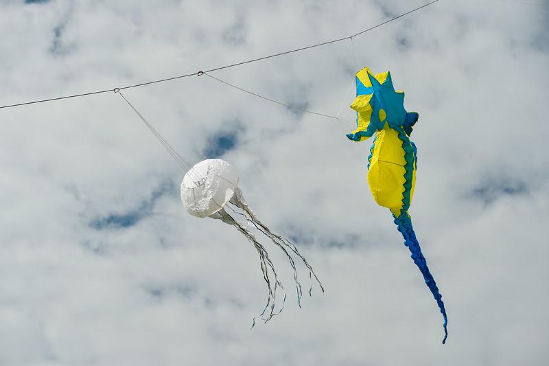 Kites and Fishing_2015_057.jpg