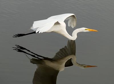 SulliPix, Greg's Bird Gallery