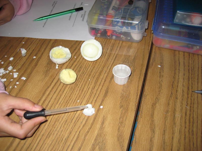Egg Experiment 003.jpg