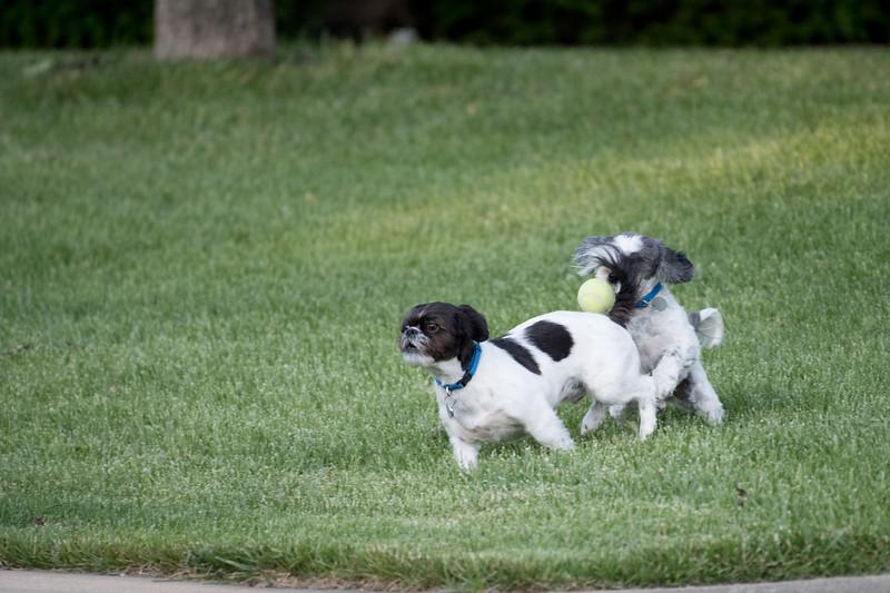 LuLu - Brady - Cooper Play Friends (32 of 109).jpg
