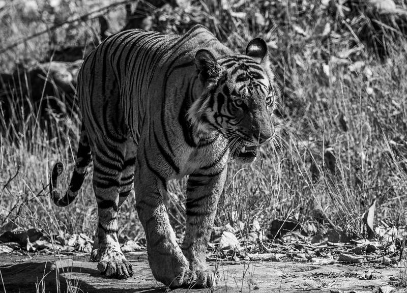 India_April_2019-720.jpg