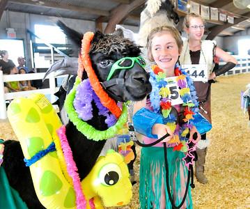 2015 4-H Fair Llama/Alpaca Show
