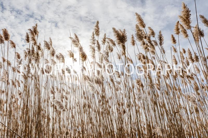 202011202020_11_20 Tall Pampas Grass023--4.jpg
