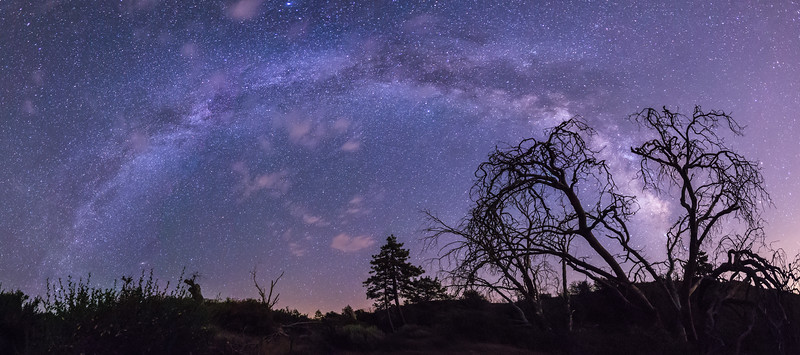 Panorama of the Milky Way over Laguna Meadow
