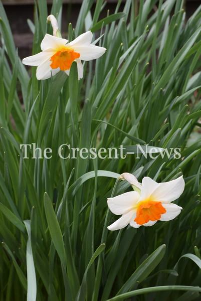 04-25-19 NEWS Floral color
