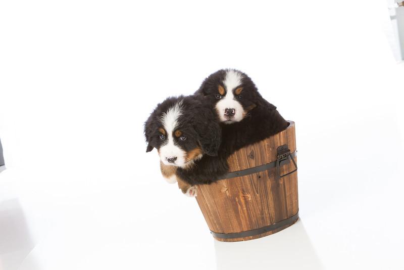 2013-Pearson Pups-Jun02-0412.jpg