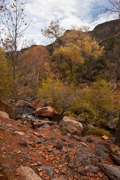Sedona - Oak Creek and Fall Leaves - Nov2010