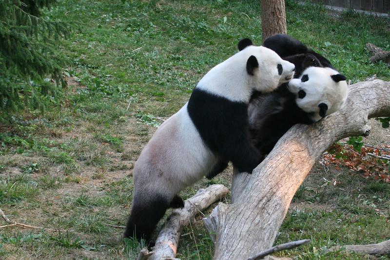 Panda080407_0024.JPG