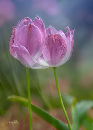 Artistic Floral Images