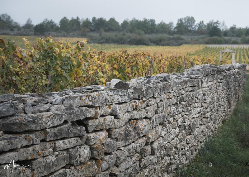 2019-10 - Burgundy Vacation-2783_edit.jpg