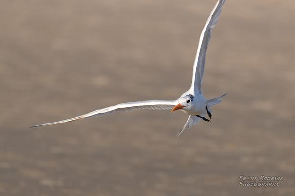Birds in San Diego