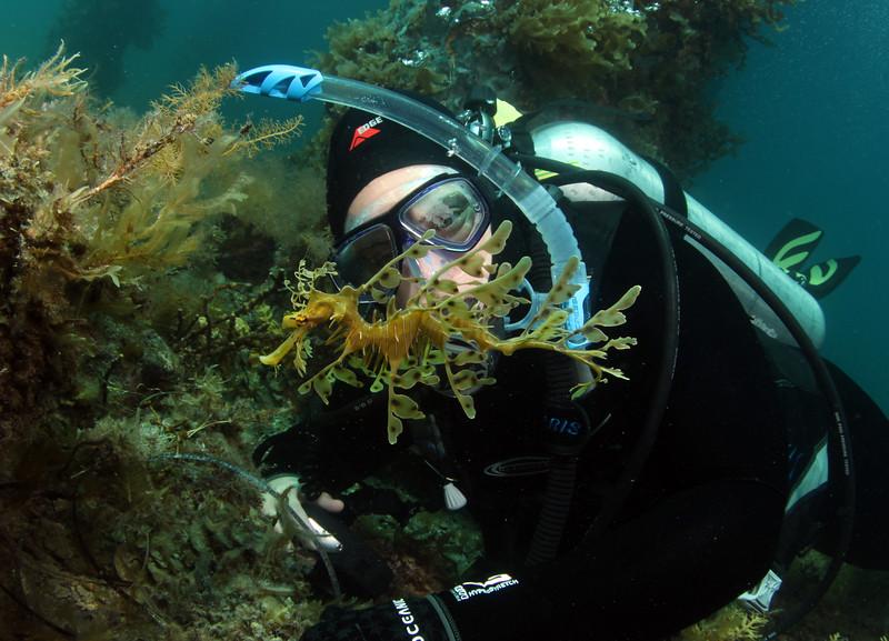 Sammi and Leafy Seadragon